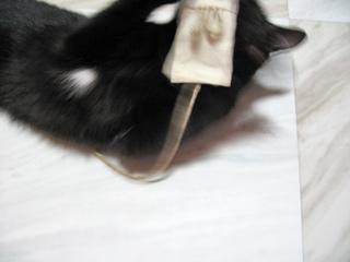 猫ノアとキャットニップおもちゃ