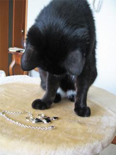 猫ノアと迷子札