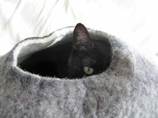 猫ノアとウールキャットベッド