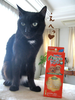 猫ノアとハミガキサプリシート