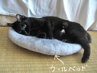 猫ノアとウールベッド