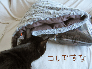 猫ノアと寝袋型ベッド