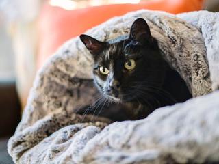 猫ノアと袋型ベッド