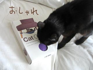 猫ノアとハンモック