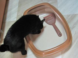 猫ノアとトイレ