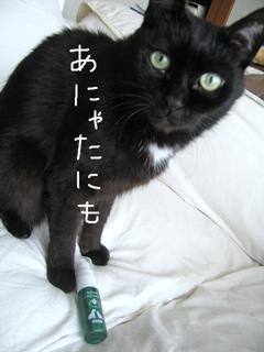猫ノアとハミガキサプリ