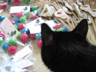 猫ノアと新しいおもちゃ