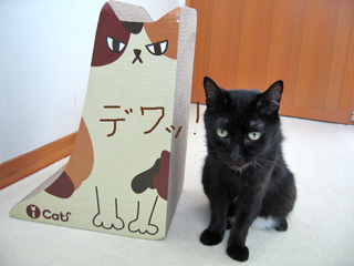 猫ノアとツメトギ