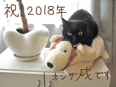 猫ノアとイヌ