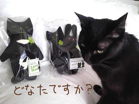 猫ノアとチビノア